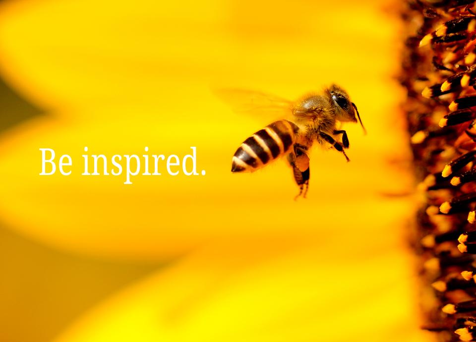 honey bee flies into bright yellow sunflower