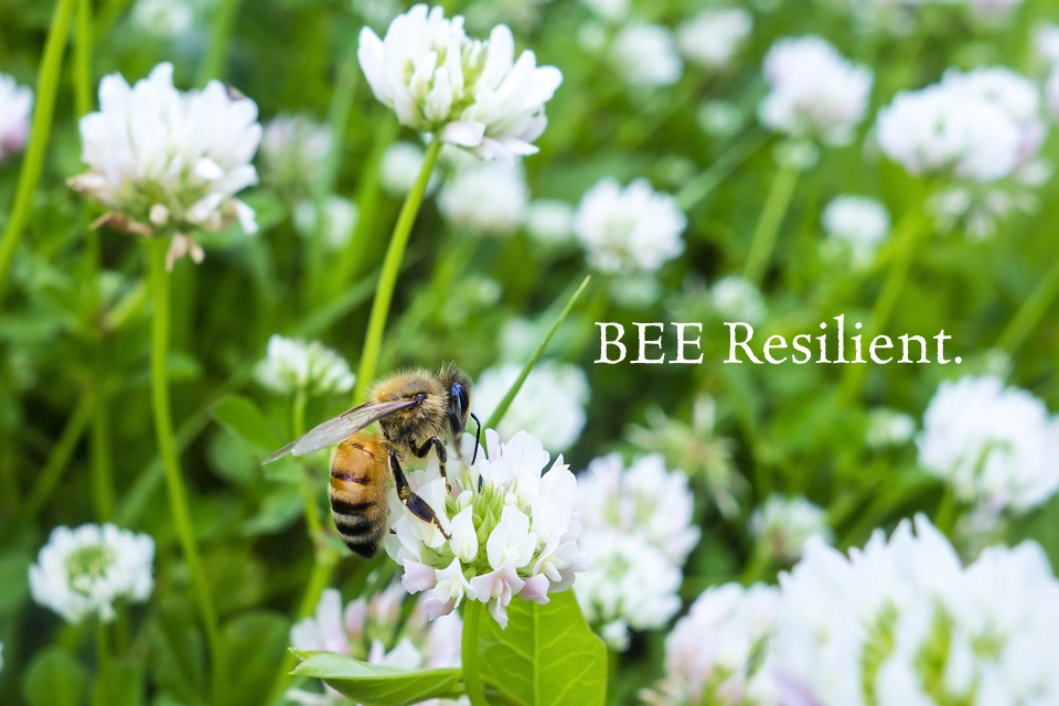 What It Means to Be Resilient
