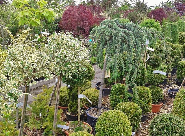 montar un vivero de plantas mantenimiento de jardines
