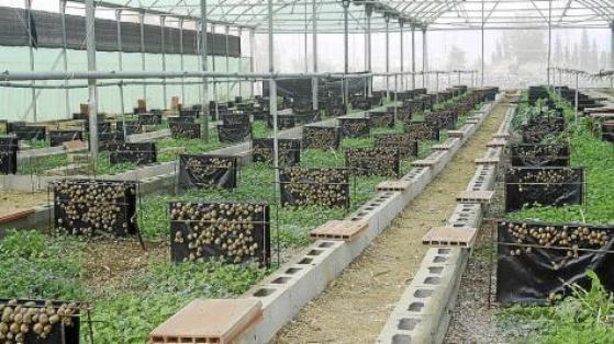 Comience su propio negocio de helicicultura - Criar caracoles