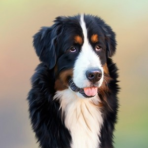 Montar una Peluquería Canina Móvil