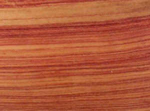 tulipwood_large_web