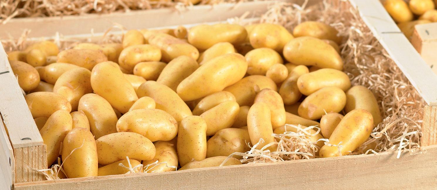 Comment Cuisiner Des Pommes De Terre
