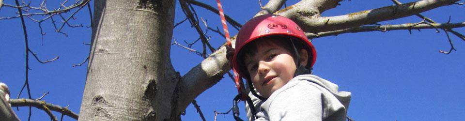 Giardinaggio potatura e abbattimento alberi Osimo Ancona