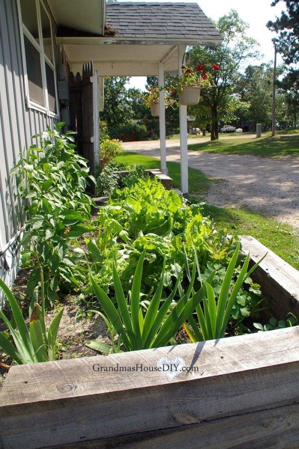 kitchen garden planning good