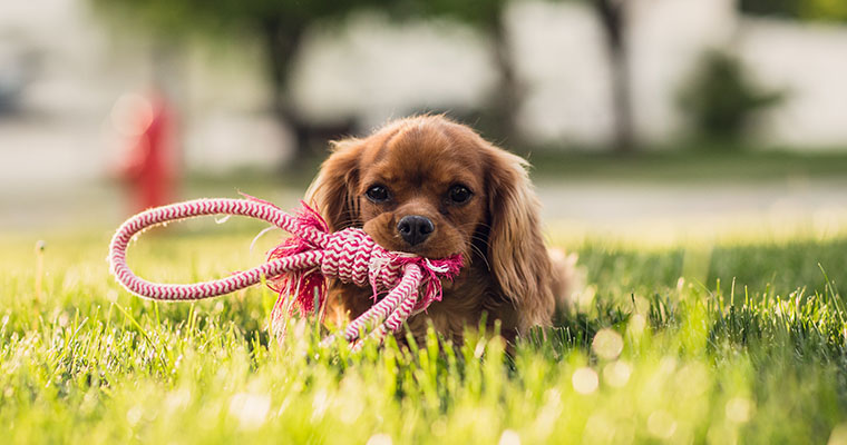 Lessons My Dog Taught Me About Play