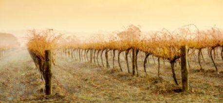 vineyard-rain-5406978