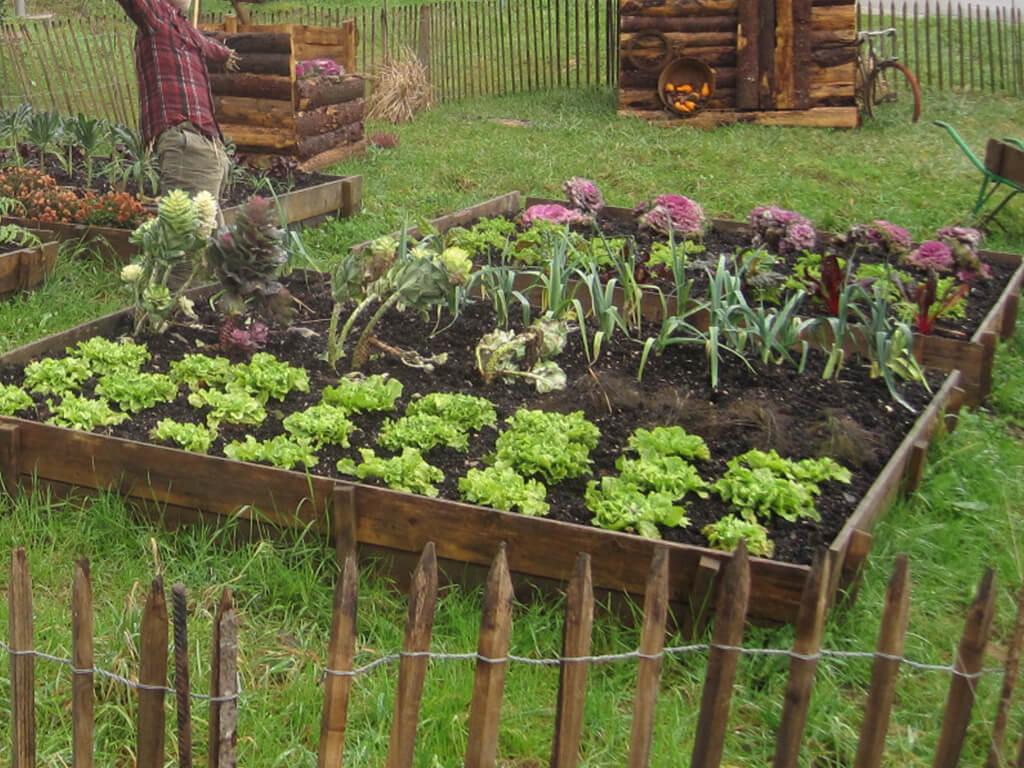 Les diffrentes astuces pour son jardin potager  GrandsMamanscom
