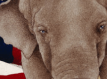SCGOP Must Sacrifice Leadership to Preserve the Party