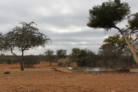 africa blind hunting