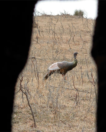 turkey hunting blind