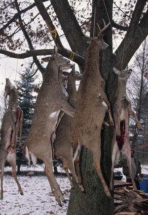 deer hunting taxidermy care