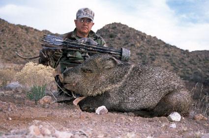 javelina bow hunting