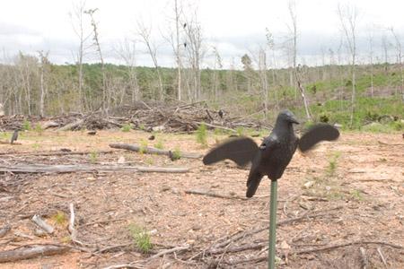 crow hunting decoy