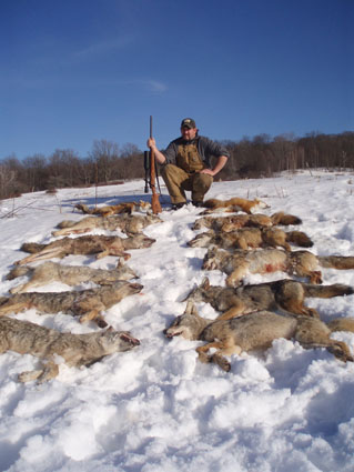 eastern coyote hunting