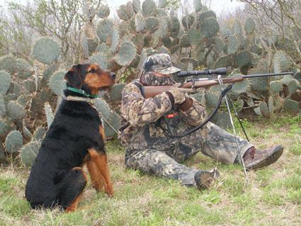 coyote decoy dog