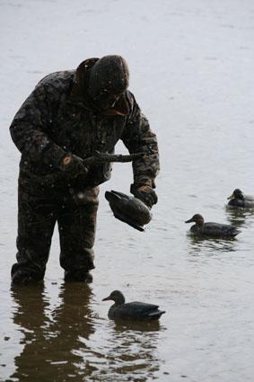 decoy spread hunting