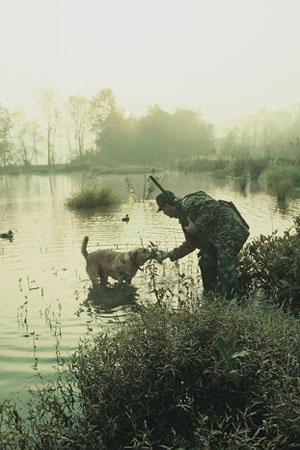 teal hunting