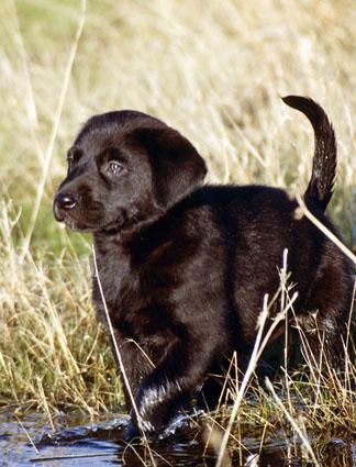 puppy hunting