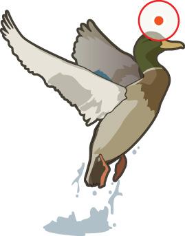 duck off water shot