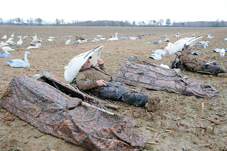 mississippi goose hunting