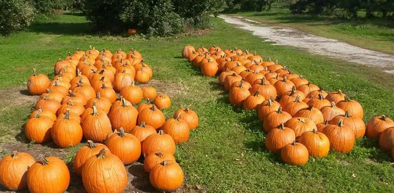 Grant County Pumpkin Patches and Fall Fun