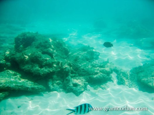 Pulau Perhentian underwater photography of fish and reef