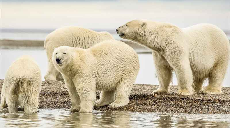 alaska tourism grant