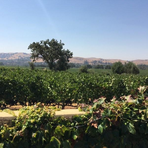 livermore vineyards