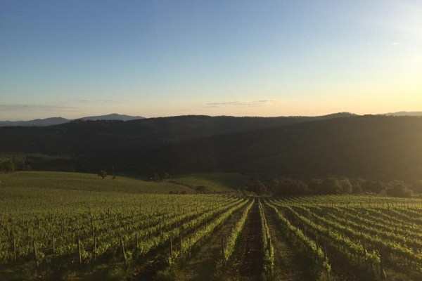 vinos toscanos
