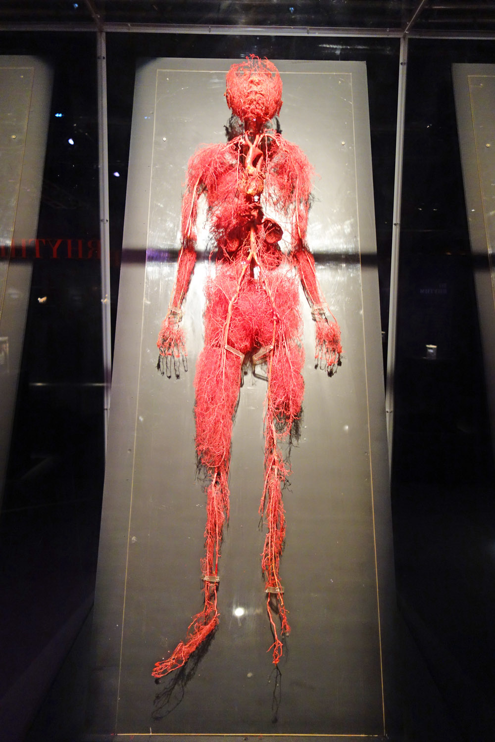Real Bodies The Exhibition Q  A with Tom Zaller