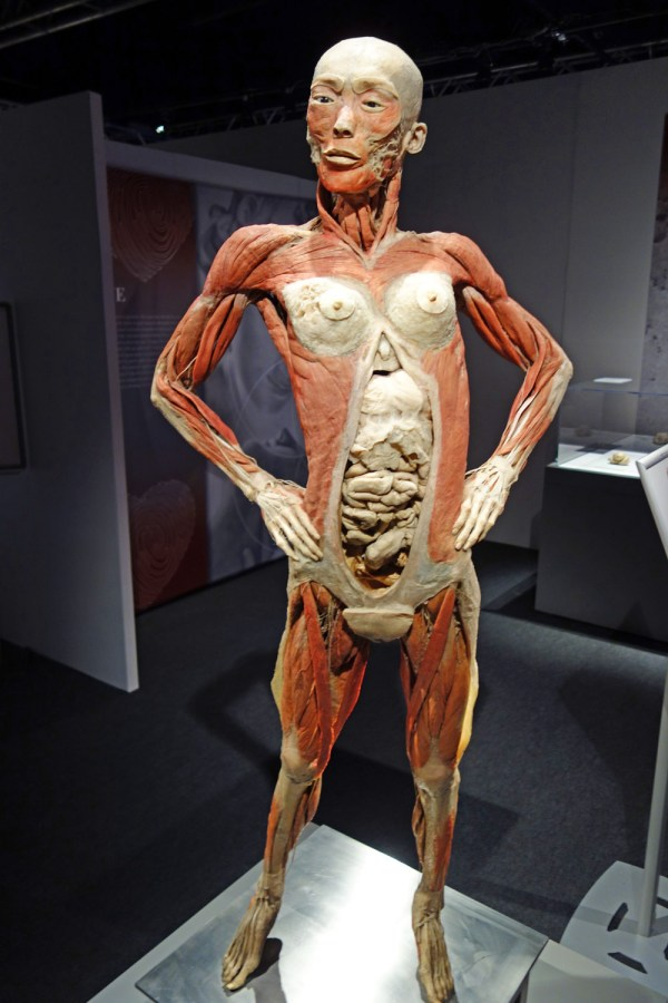 Real Bodies Exhibition & With Tom Zaller