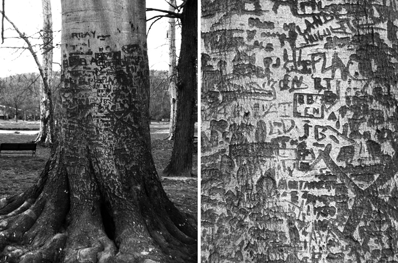 arbre-vizille-bold-graff