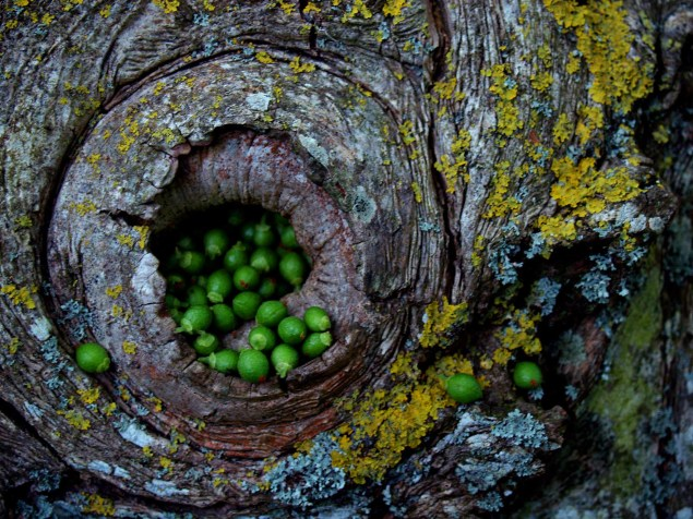 land_art_photograpy_ludovic_fesson_14