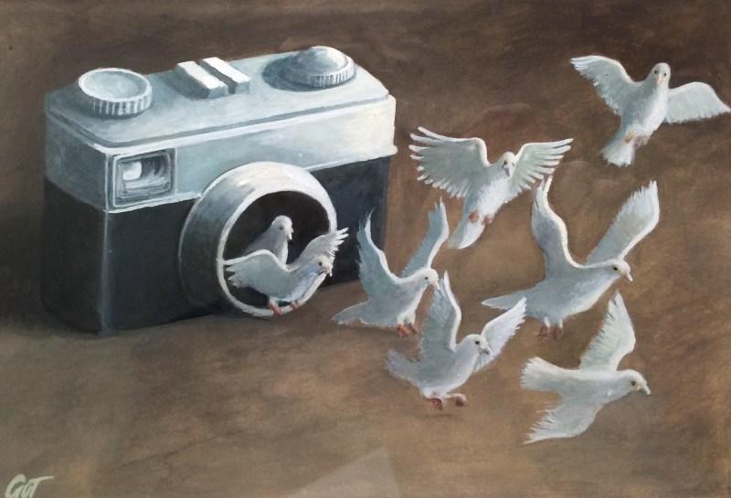 oiseaux-appareil-photo
