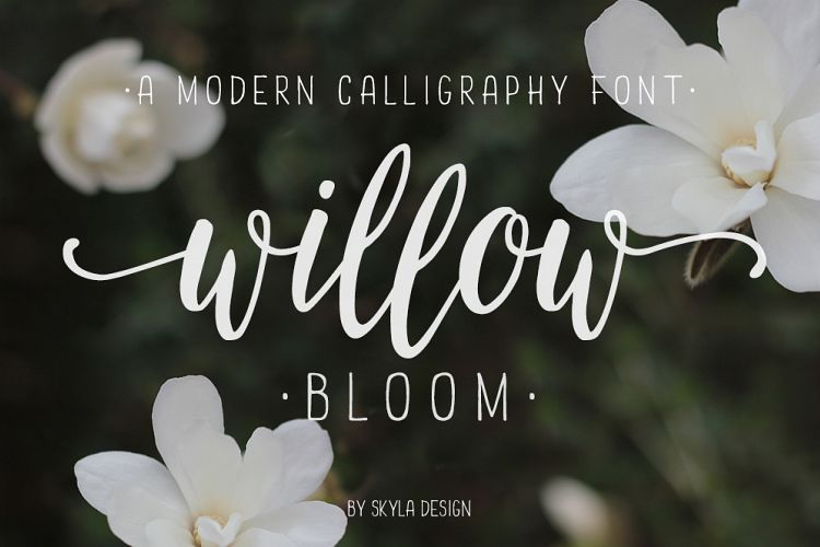 Willow Bloom