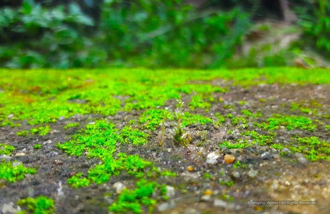 Small Plant With Moss Close Up Background