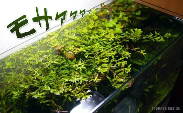 有茎草がオーバーハング
