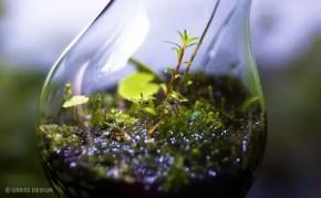 10分で出来る!水草と苔を使った電球テラリウムの作り方☆