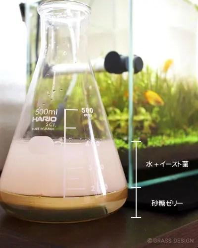 砂糖ゼリーに水とイースト菌を加える