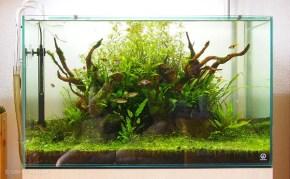 僕が熱帯魚や水槽の撮影に使っているカメラ・設定・撮影方法