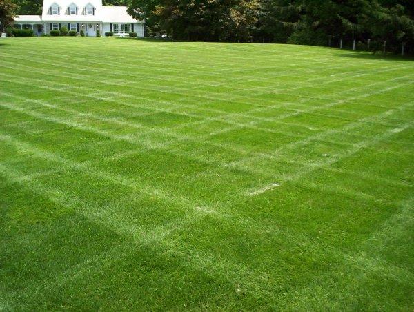fertilizing tips grassmaster
