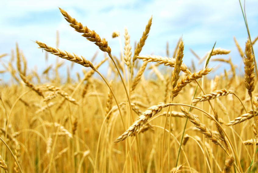 Thanks to the Jones Act, Livestock Farmers Are Importing Foreign Grain