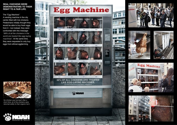 NOAH The Egg machine
