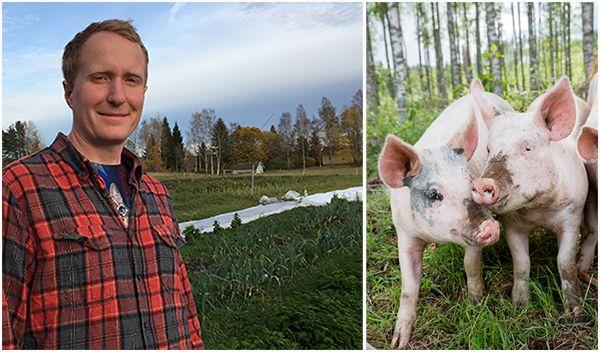 FOTO JOHNER, https://www.aftonbladet.se/debatt/a/1Qw6K/jag-gick-fran-att-vara-grisbonde--till-vegan