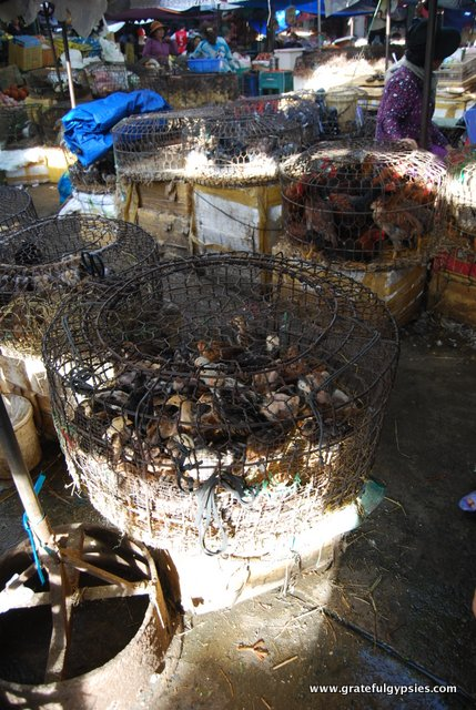 Chickens, ducks, and more in cages.