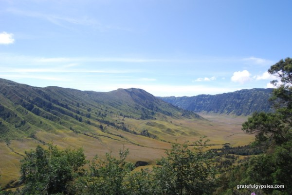 Mt. Bromo Savannah