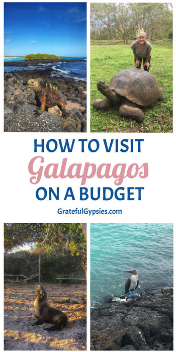 When it comes to bucket list destinations, it's hard to top the Galapagos Islands. Thanks to their isolation, it's a bit tricky to travel Galapagos on a budget. We managed to pull it off, though, and we want to tell you how! This post includes a breakdown of our costs for our 6-day DIY land-based trip on Santa Cruz and San Cristobal. #galapagostravel #ecuador #galapagosonabudget