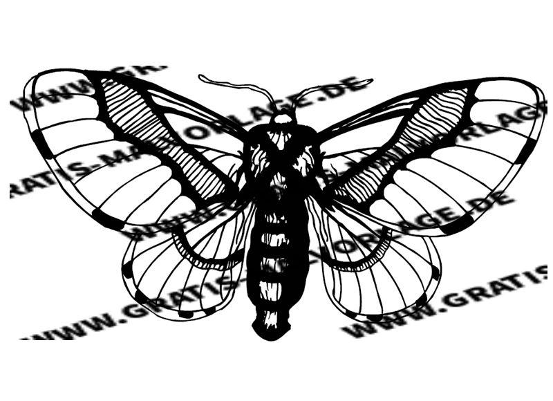 36 Schmetterling Malvorlage Einfach - Besten Bilder von