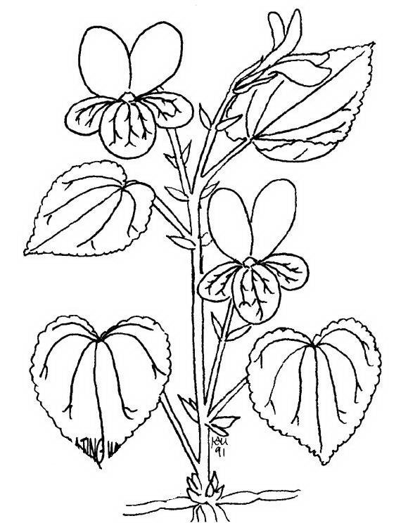 Disegni fiori da colorare e stampare